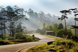 pine trees, road, bidoup nui ba, dalat, vietnam